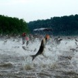 JULY 2011: Asian carp don't visit to share knowledge. Their destructive feeding and breeding habits produce severe ecological damage, causing food chains to collapse. The region faces an environmental disaster...